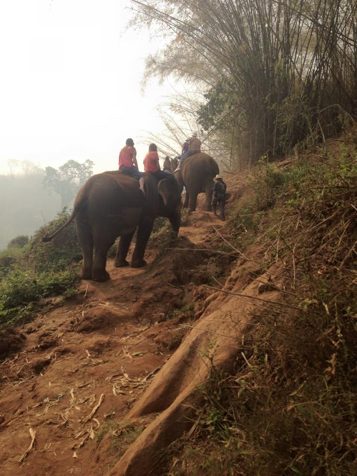 Ran-Tong Elephant Camp: An Elephant Trek Through the ...
